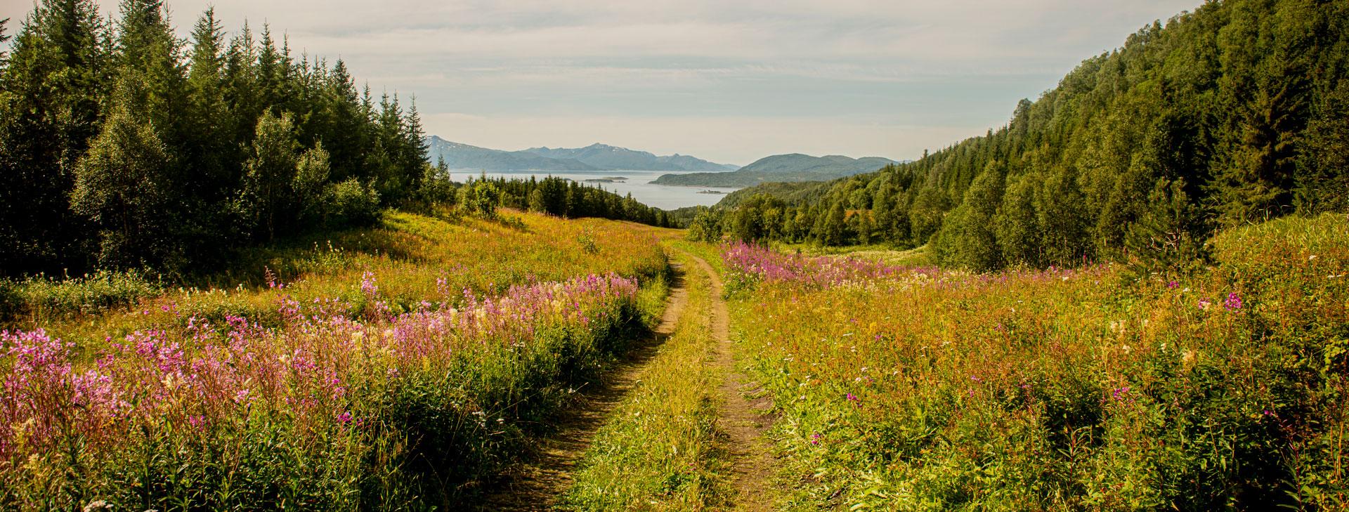 Utsikt over Ofotfjorden